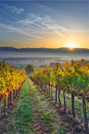 Italy, Umbria, Perugia district. Autumnal Vineyards near Montefalco. Stock Photo - Rights-Managed, Code: 862-07495939