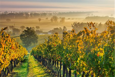 Italy, Umbria, Perugia district. Autumnal Vineyards near Montefalco. Stock Photo - Rights-Managed, Code: 862-07495940