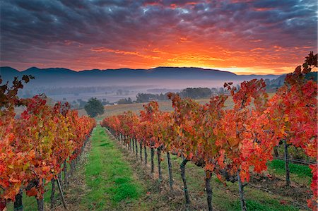 Italy, Umbria, Perugia district. Autumnal Vineyards near Montefalco. Stock Photo - Rights-Managed, Code: 862-07495941