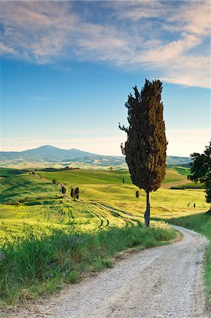 Italy, Tuscany, Siena district, Orcia Valley, country road near Pienza. Stock Photo - Rights-Managed, Code: 862-07690177