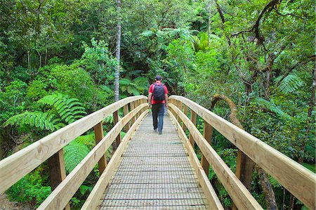 Man walking across footbridge on Waiomu Kauri Grove trail, Thames, Coromandel Peninsula, North Island, New Zealand (MR) Stock Photo - Rights-Managed, Code: 862-07690509