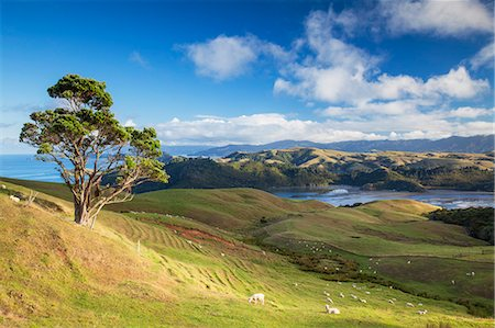 View of Manaia Harbour and farmland, Coromandel Peninsula, North Island, New Zealand Stock Photo - Rights-Managed, Code: 862-07690517