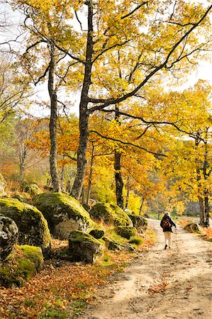 Medieval path with beech trees and chestnut trees in autumn time. Serra da Estrela Nature Park, Portugal (MR) Stock Photo - Rights-Managed, Code: 862-07690696