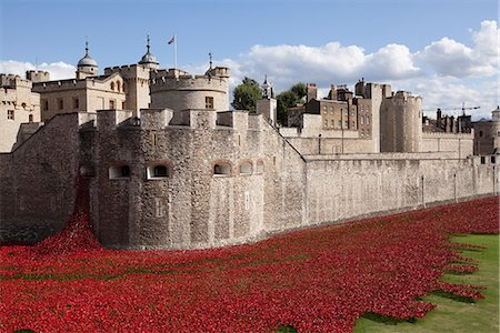 represented - UK, England, London. Blood Swept Lands and Seas of Red, a major art installation at the Tower of London, marking one hundred years since the first full day of Britain's involvement in the First World War. Stock Photo - Rights-Managed, Code: 862-07909704