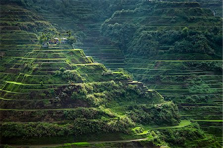 philippine terrace farming - Asia, South East Asia, Philippines, Cordilleras, Banaue; UNESCO World heritage listed Ifugao rice terraces near Banaue Stock Photo - Rights-Managed, Code: 862-07910417