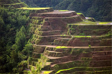 philippine terrace farming - Asia, South East Asia, Philippines, Cordilleras, Banaue; UNESCO World heritage listed Ifugao rice terraces Stock Photo - Rights-Managed, Code: 862-07910418