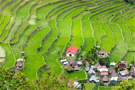 philippine terrace farming - Asia, South East Asia, Philippines, Cordilleras, Banaue; Batad, Zoe Logos church and village houses in the UNESCO World heritage listed Ifugao rice terraces of the Philippine cordilleras Stock Photo - Rights-Managed, Code: 862-07910420