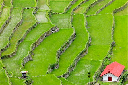 philippine terrace farming - Asia, South East Asia, Philippines, Cordilleras, Banaue; Batad, Zoe Logos church in the UNESCO World heritage listed Ifugao rice terraces of the Philippine cordilleras Stock Photo - Rights-Managed, Code: 862-07910421