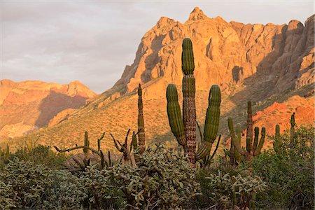 Desert outside of La Paz,Baja California, Mexico Stock Photo - Rights-Managed, Code: 862-08090900
