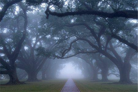 USA, Louisiana, St. James Parish, Vacherie, Oak Alley Plantation Stock Photo - Rights-Managed, Code: 862-08091527