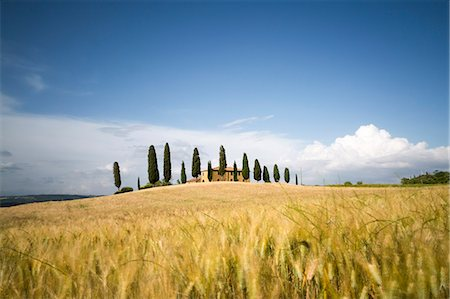 Val d'Orcia, Tuscany, Italy. A lonely farmhouse with cypress trees standing in line in foreground. Yellow meadow in summer Stock Photo - Rights-Managed, Code: 862-08273466