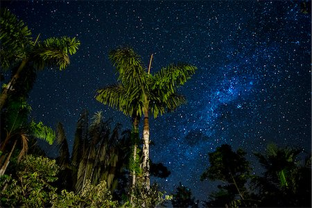South America, Peru, Amazonia, South Manu National Park , night sky, UNESCO World Heritage Stock Photo - Rights-Managed, Code: 862-08273776