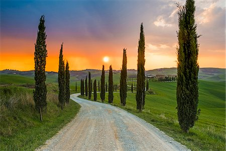 Valdorcia, Siena, Tuscany, Italy. Road of cypresses leading to a farmhouse with a stormy sunset in the background. Stock Photo - Rights-Managed, Code: 862-08699442
