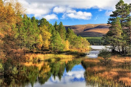 fall trees lake - Scotland, Aviemore. The mountains of the Cairngorms reflected in Loch Morlich. Stock Photo - Rights-Managed, Code: 862-08699872