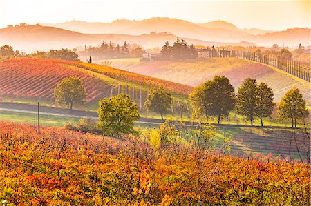 seasonal - Castelvetro, Modena, Emilia Romagna, Italy. Sunset over the Lambrusco Grasparossa vineyards and rolling hills in autumn Stock Photo - Rights-Managed, Code: 862-08719047