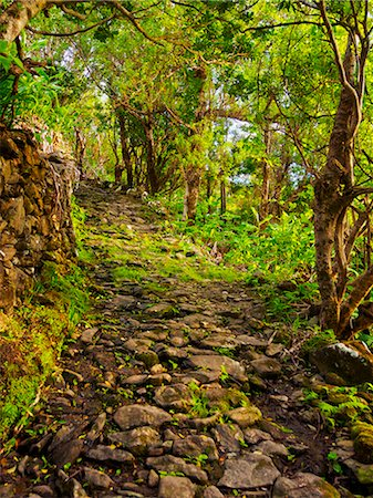 flores - Portugal, Azores, Flores, Old Trail between Mosteiro and Lajedo. Stock Photo - Rights-Managed, Code: 862-08719361
