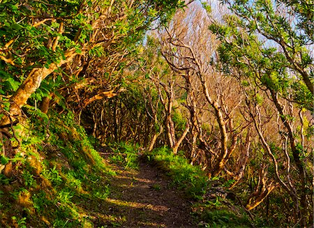 flores - Portugal, Azores, Flores, Old Trail between Mosteiro and Lajedo. Stock Photo - Rights-Managed, Code: 862-08719362