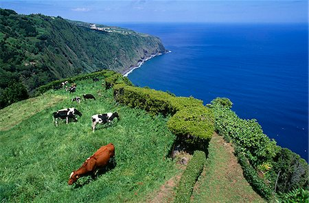 Clifftop view from Ponta da Madrugada on the island of Sao Miguel,Azores Stock Photo - Rights-Managed, Code: 862-03354426