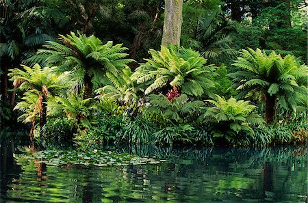 Ferns growing next to a pool in Terra Nostra Botanical Gardens on the island of Sao Miguel,Azores Stock Photo - Rights-Managed, Code: 862-03354427