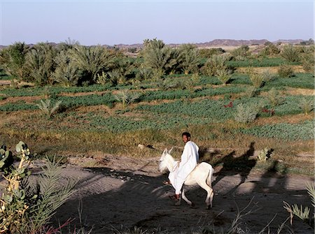 riding crop - In early morning sunlight,a donkey rider passes irrigated fields along the banks of the River Nile near Shaallal arraabia or the 4th Cataract. This stretch of the river will be flooded in 2008 when a huge Arab funded,Chinese-built,hydro-electric dam will be completed. Already,some villages have been re-located to irrigated land far away. Stock Photo - Rights-Managed, Code: 862-03354585