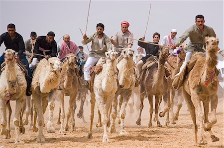 A camel race gets underway at Palmyra's 5km long racetrack. The races are held every year as part of the Palmyra Festival,Syria Stock Photo - Rights-Managed, Code: 862-03354847