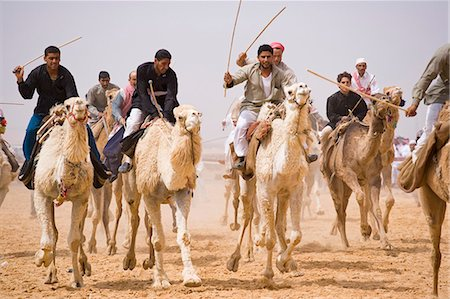 A camel race gets underway at Palmyra's 5km long racetrack. The races are held every year as part of the Palmyra Festival,Syria Stock Photo - Rights-Managed, Code: 862-03354848