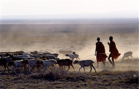 In the early morning,a Maasai herdsboy and his sister drive their family's flock of sheep across the friable,dusty plains near Malambo in northern Tanzania. Stock Photo - Rights-Managed, Code: 862-03355134