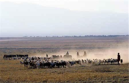 In the early morning,a Maasai family drives their livestock across the friable,dusty plains near Malambo in northern Tanzania. Stock Photo - Rights-Managed, Code: 862-03355135