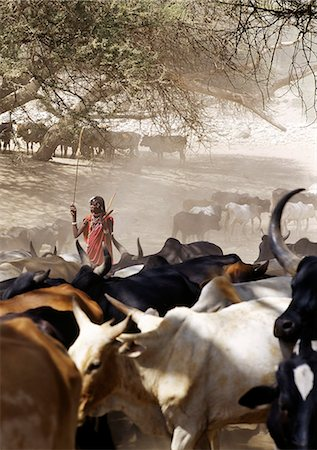 A Maasai warrior drives his family's cattle to the Sanjan River in northern Tanzania Stock Photo - Rights-Managed, Code: 862-03355150