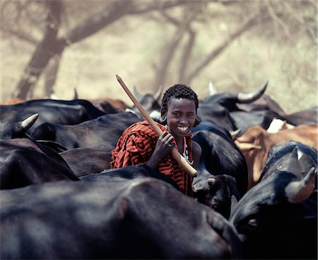 A young Maasai herdsboy drives his family's herds to grazing grounds close to the Sanjan River in Northern Tanzania. Stock Photo - Rights-Managed, Code: 862-03355151