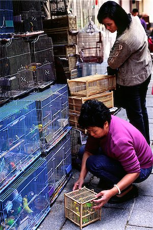 A shop owner removes a bird for a customer from the many cages in the Yuen Po Street Bird Garden in Mong Kok district,Hong Kong. Stock Photo - Rights-Managed, Code: 862-03350979