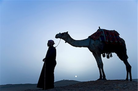 A bedouin leads his camel along the top a dune at sunset,Giza,Egypt . Stock Photo - Rights-Managed, Code: 862-03352879