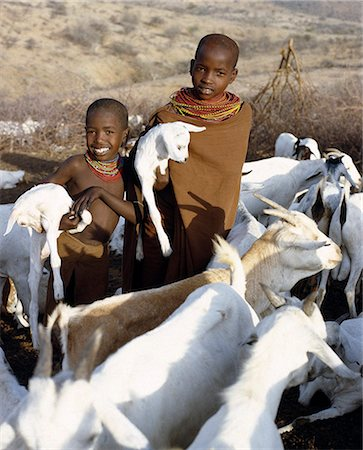In the early morning,young Samburu girls take kids to their mothers. They will then milk the nanny goats leaving half the milk for the kids. Only women and children milk goats although every member of the family will drink the milk. Stock Photo - Rights-Managed, Code: 862-03366028