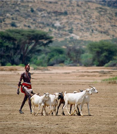A Samburu Warrior drives his goats along the wide,sandy seasonal watercourse of the Milgis where waterholes dug by the Samburu in the dry season are a lifeline for pastoralists in this semi-arid region of their district. Stock Photo - Rights-Managed, Code: 862-03366023