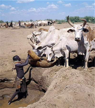 Turkana women and girls are responsible for watering livestock,which is unusual among pastoral societies. Here,a girl waters cattle from a Waterhole dug in the sand of a seasonal watercourse. The Turkana manipulate the horns of their ox's into perfect symmetry or any whimsical shape that takes the owner's fancy. Stock Photo - Rights-Managed, Code: 862-03366137