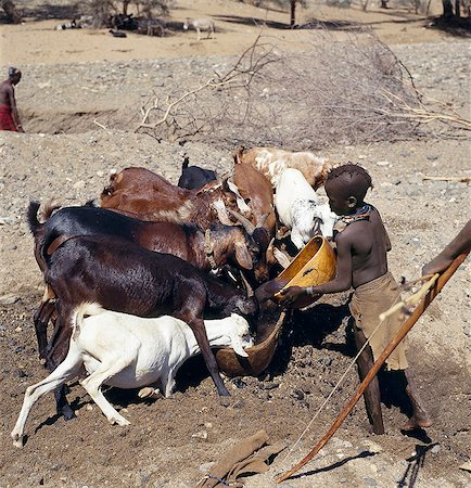 Turkana women and girls are responsible for watering livestock,which is unusual among pastoral societies. Here,a young girl waters goats from a waterhole dug in the sand of a seasonal watercourse. Her young brother will control the flow of stock to the water trough. In the background,a man digs out another waterhole; they have to been deepened regularly towards the end of the dry season. Stock Photo - Rights-Managed, Code: 862-03366138