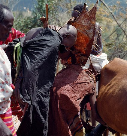The evening before a Samburu boy is circumcised,he must lean over his mother under a special ochred goatskin cape as she milks a cow that has not given birth more than twice. This milk will be kept overnight in a traditional wooden gourd-like container and will be poured over the boy's head just before he is circumcised early the next morning. Stock Photo - Rights-Managed, Code: 862-03366543