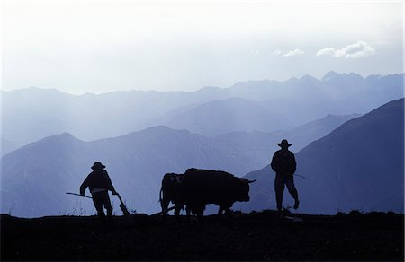 plow - Silhouette of ploughmen with oxen,Colca Canyon,Peru. Stock Photo - Rights-Managed, Code: 862-03360416