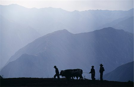 plow - Peru,Colca Canyon. Silhouetted ploughmen with oxen Stock Photo - Rights-Managed, Code: 862-03360742