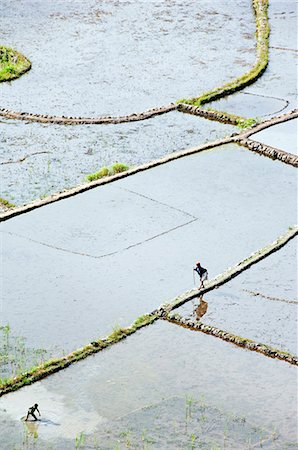 philippine terrace farming - Philippines,Luzon Island,The Cordillera Mountains,Kalinga Province,Tulgao Village near Tinglayan. Elderly woman and local boy working in water filled rice terraces with fish traps. Stock Photo - Rights-Managed, Code: 862-03360809
