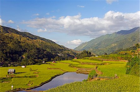 philippine terrace farming - Philippines,Luzon Island,The Cordillera Mountains,Kalinga Province,Tinglayan. Rice terraces in Luplula village. Stock Photo - Rights-Managed, Code: 862-03360800