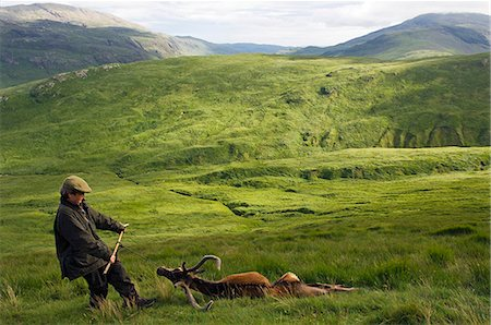deer hunt - Dragging a red deer stag off the hill at the end of a successful stalk on the Benmore Estate Stock Photo - Rights-Managed, Code: 862-03361558