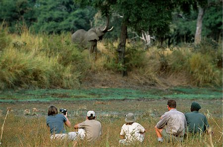 . Quietly watching a feeding elephant during a guided game walk on a family safari. Stock Photo - Rights-Managed, Code: 862-03437976