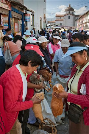 Ecuador, Guinea pigs at the weekly Sangolqui market,considered a delicacy here and Peru. Stock Photo - Rights-Managed, Code: 862-03710894