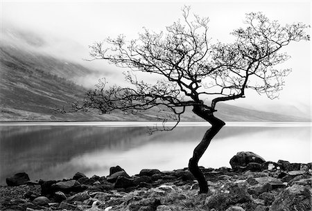 silhouette black and white - Solitary tree on the shore of Loch Etive, Highlands, Scotland, UK Stock Photo - Rights-Managed, Code: 862-03713409