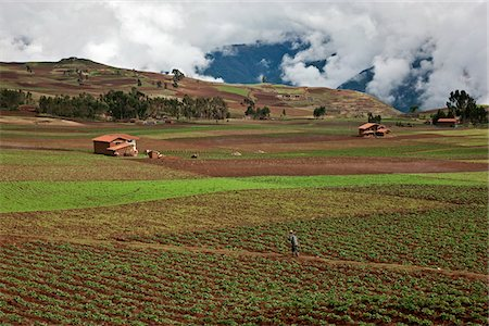 plow - Peru, A man crosses fertile fields of growing crops in the rich farming country of the Urubamba Valley. Stock Photo - Rights-Managed, Code: 862-03732051
