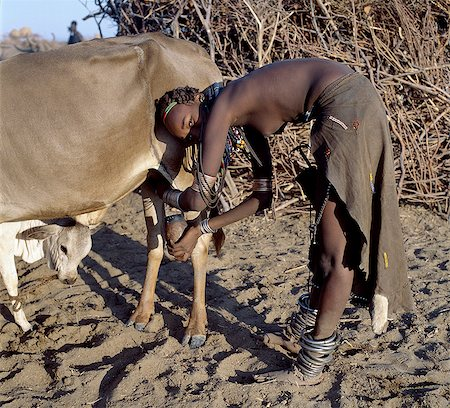 In the early morning, a Dassanech girl milks a cow outside a settlement of the Dassanech people in the Omo Delta of Southwest Ethiopia.The nearness of the calf increases the flow of milk.The girls decorated leather skirt and adornment are typical of the young women of her tribe. Stock Photo - Rights-Managed, Code: 862-03820442