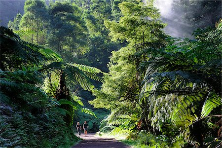 Two men walking along the exotic forest of Caldeira Velha, near Ribeira Grande. Sao Miguel, Azores islands, Portugal Stock Photo - Rights-Managed, Code: 862-03889122