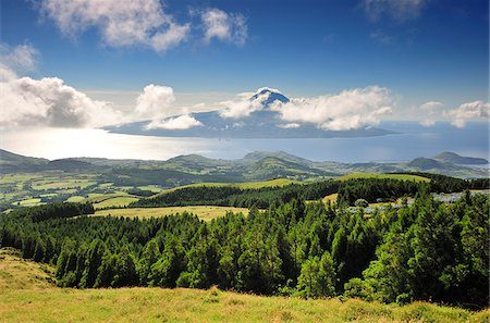 The cryptomeria's forests of Faial with the Volcano of Pico island on the horizon. Faial, Azores islands, Portugal Stock Photo - Rights-Managed, Code: 862-03889272