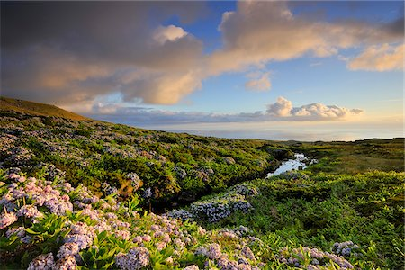 Central plateau with hydrangeas at dusk. Flores, Azores islands, Portugal Stock Photo - Rights-Managed, Code: 862-03889281